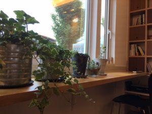 ショールームの生き生きとした植物たち