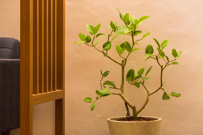 しっくい壁は調質性能抜群で植物も元気