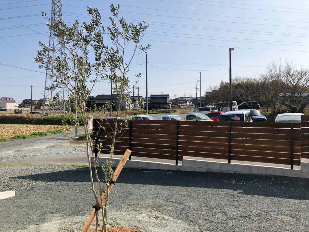 気持ち良さそうに風に揺れるオリーヴの木