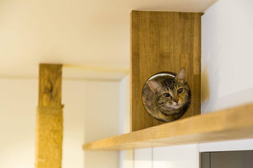 リノベで猫も快適・満足な家が完成