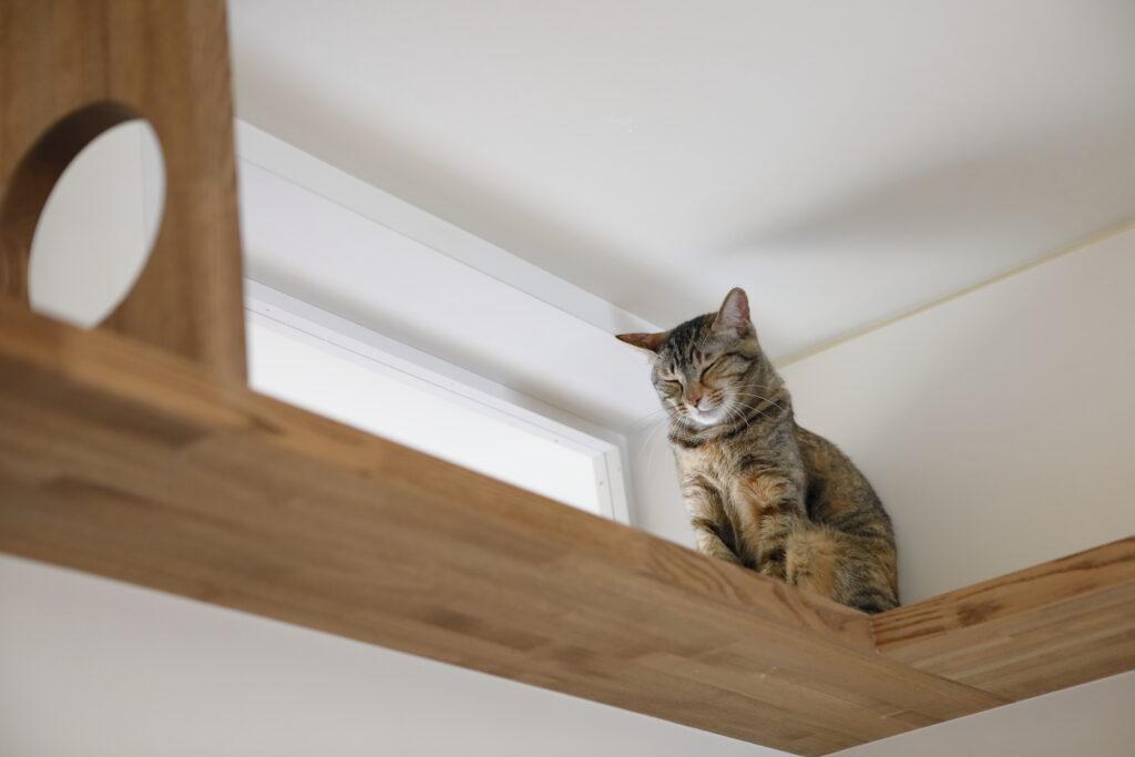 リノベでつけた高窓は明かり取りと、ねこ的に安心できる場所