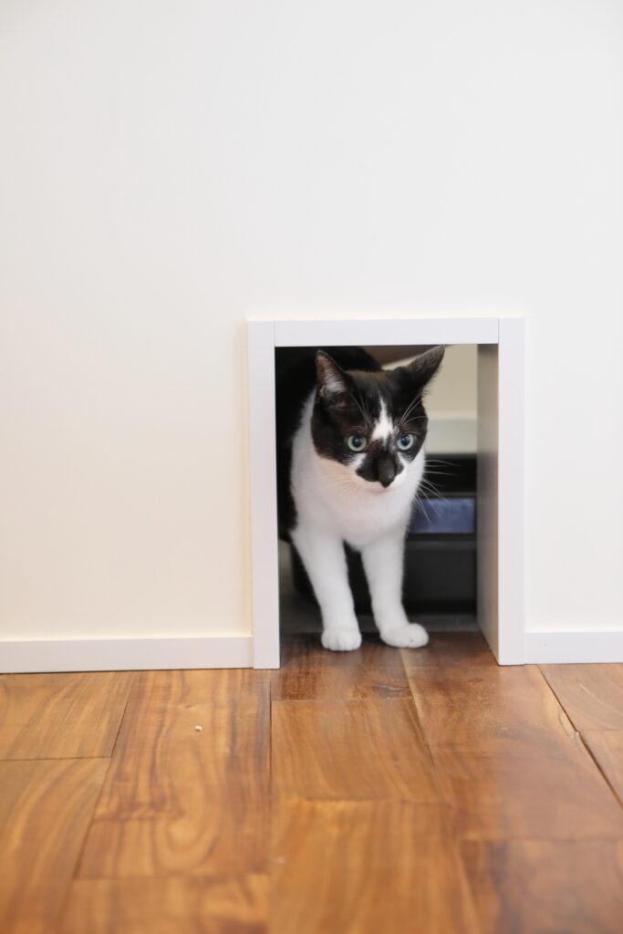 階段下の猫トイレは換気扇もついて匂いが篭らない